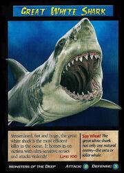 Great White Shark.jpg