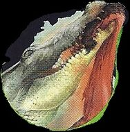Saltwater Crocodile 4