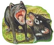 Tasmanian Devil Back Small 3