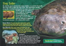 Giant Salamander back.jpg