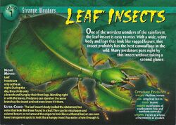Leaf Insects front.jpg