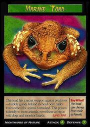 Marine Toad.jpg