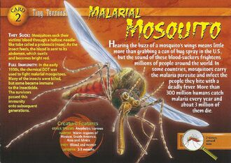 Malarial Mosquito front