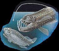 Viperfish 2