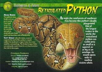 Reticulated Python front