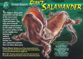 Giant Salamander front