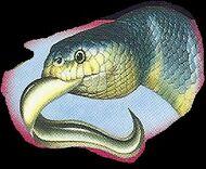 Sea Snake 4