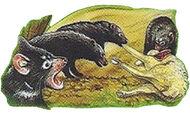 Tasmanian Devil Back Small 2