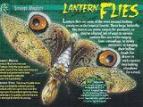 Lantern Flies