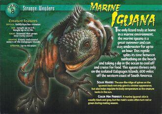 Marine Iguana front
