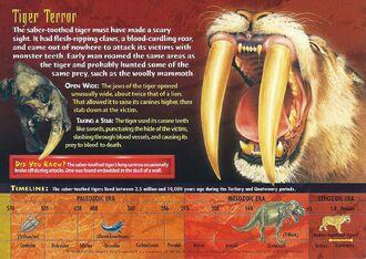 Saber-Toothed Tiger back