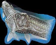 Viperfish 3