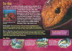 Sea Snake back.jpg