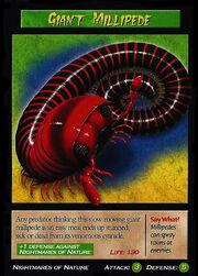 Giant Millipede.jpg