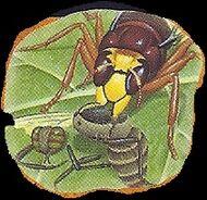 Hornet 3