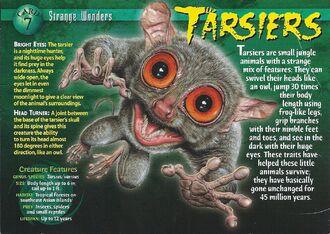 Tarsiers front