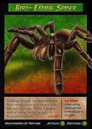 Bird-Eating Spider.jpg