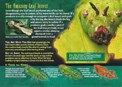 Leaf Insects back.jpg