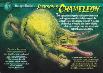 Jackson's Chameleon front