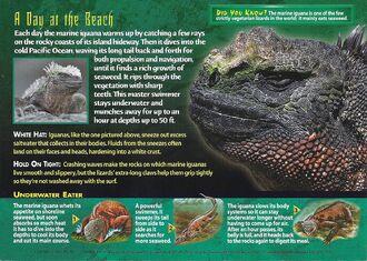 Marine Iguana back