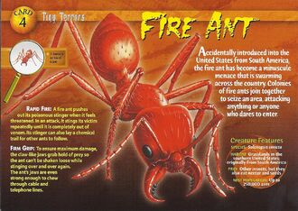 Fire Ant front