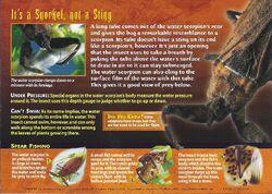 Water Scorpion back.jpg