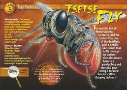 Tsetse Fly front.jpg