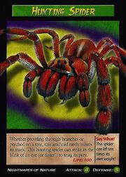 Hunting Spider.jpg