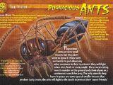Pugnacious Ants