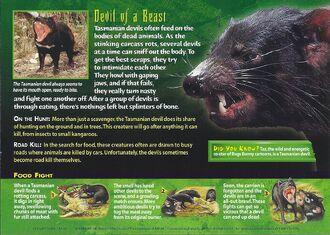 Tasmanian Devil back