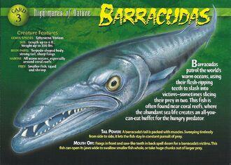 Barracudas front