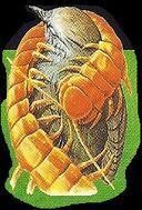 Giant Centipedes 3