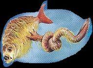 Hagfish 1