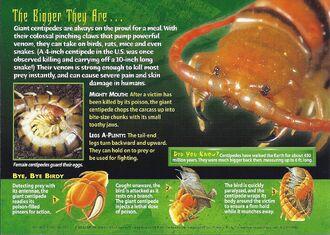 Giant Centipedes back