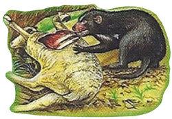 Tasmanian Devil Back Small 1.jpg