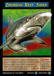 Carribean Reef Shark.jpg