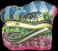Sea Snake 3