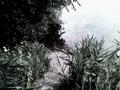 Dróżka do domu wodnika - miniatura