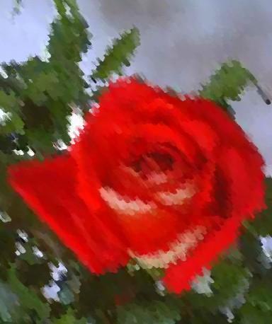 Kasyda róży