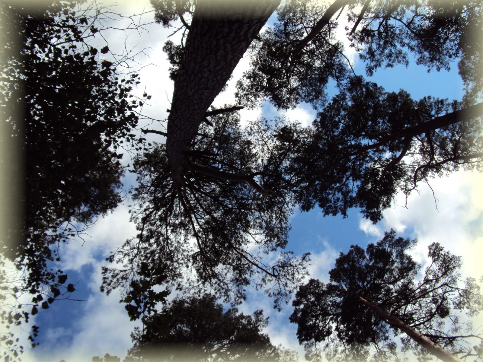 Drzewa!