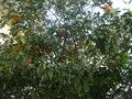 W gaju pomaranczowym