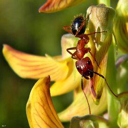 Happy Ant (13843449713).jpg