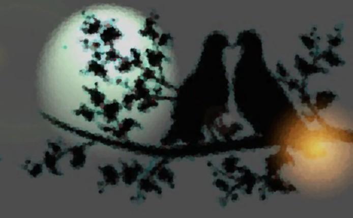 Kasyda ciemnych gołąbek