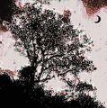 Jedyne drzewo