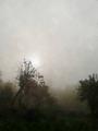 Tarnobrzeg - mgła