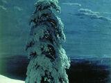 Na dzikiej Północy stoi samotnie