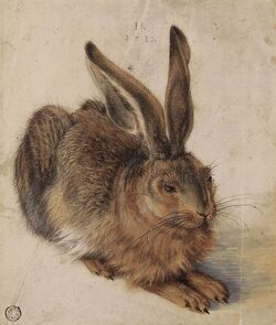 Hans Hoffmann Hare 1582.jpg