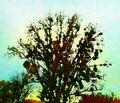 On the hillock under mistletoe - mix, pap