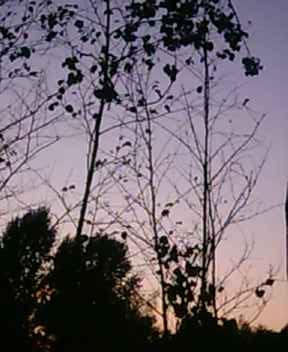 Kasyda gałęzi