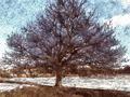 Drzewo i deszcz (mz)